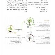 صفحات کتاب
